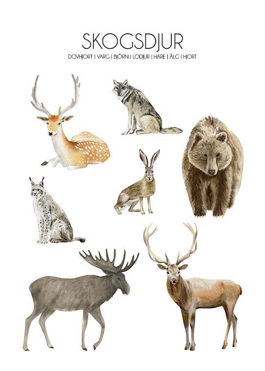 Skogsdjur poster