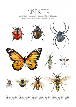Insekter poster